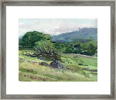 Windswept Framed Print by Donald Maier
