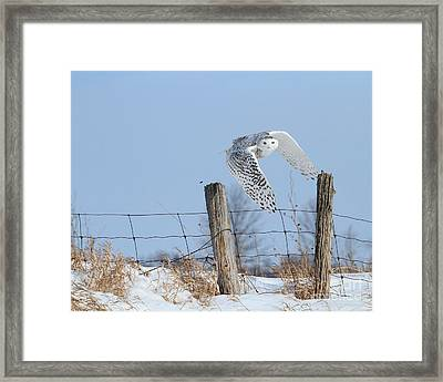 Windswept Glory Framed Print