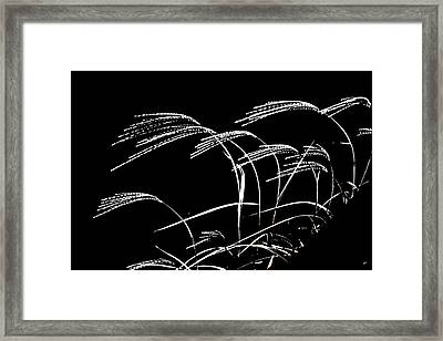Windswept Grasses Framed Print