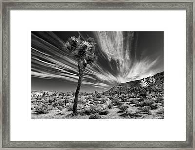 Windswept Framed Print by Joseph Smith