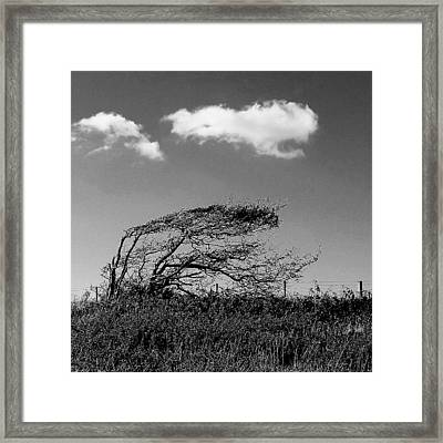Framed Print featuring the digital art Windswept by Julian Perry