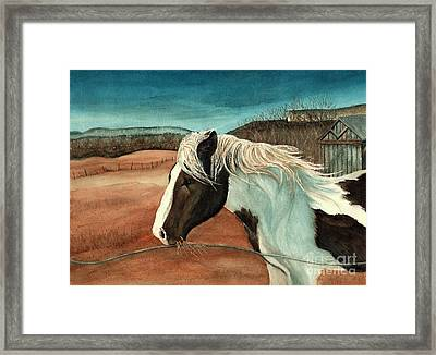 Windswept - Paint Horse - Shawangunk Framed Print by Janine Riley