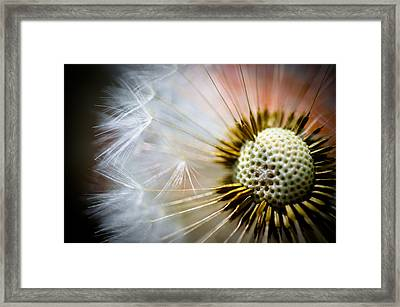 Windswept Framed Print by Pat Shawyer