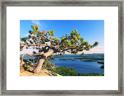 Windswept Pine On Rattlesnake Mountain Framed Print