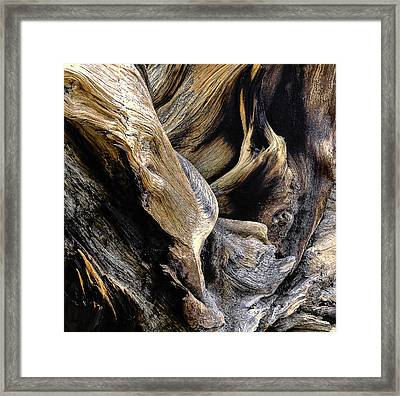 Windswept Roots Framed Print by The Forests Edge Photography - Diane Sandoval