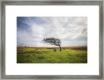 Windswept Tree Framed Print