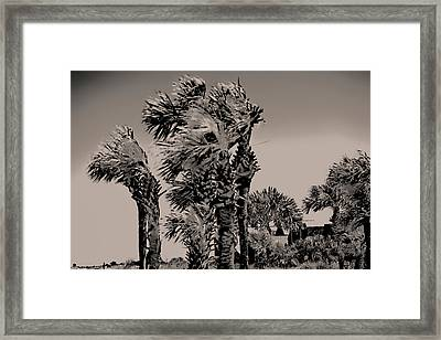 Windy Day At Beach Framed Print