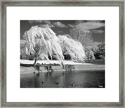 Windy Lace Framed Print by Lynn Andrews