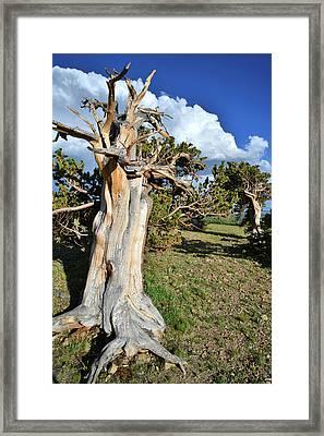 Windy Ridge Framed Print by Ray Mathis