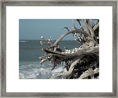 Windy Sea Framed Print by Rosalie Scanlon