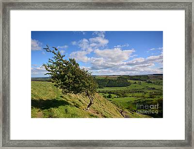 Windy Tops Framed Print