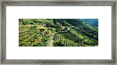 Wine And Olives Framed Print by Jacqueline M Lewis