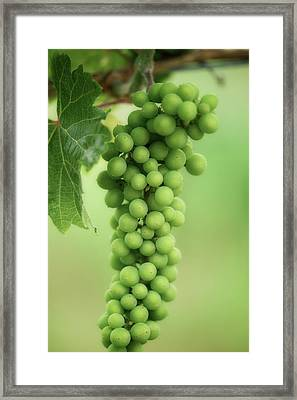 Wine Before Picture Framed Print by Lisa Knechtel