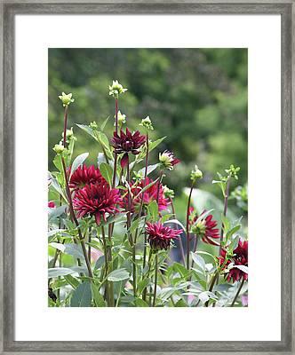 Wine Colored Flowers Framed Print by Deborah Molitoris