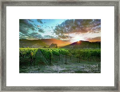 Wine Country Framed Print by Jon Neidert