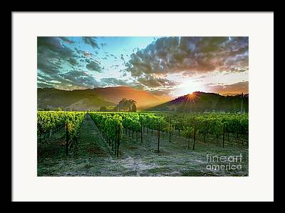 Napa Valley Vineyard Framed Prints