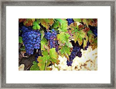 Wine Country - Napa Valley California Photography Framed Print by Melanie Alexandra Price