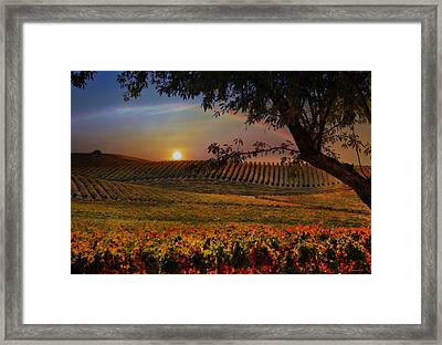 Wine Country Paradise Framed Print
