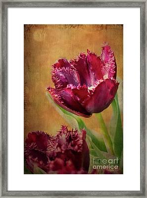 Wine Dark Tulips From My Garden Framed Print
