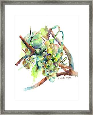 Wine Grapes Framed Print by Arline Wagner