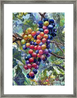 Wine Grapes Framed Print by Hailey E Herrera