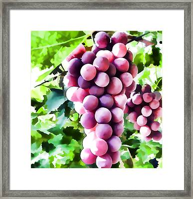 Wine Grapes On The Vine Framed Print by Lanjee Chee