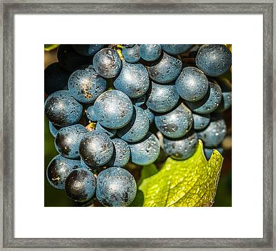 Wine Grapes Framed Print by Optical Playground By MP Ray