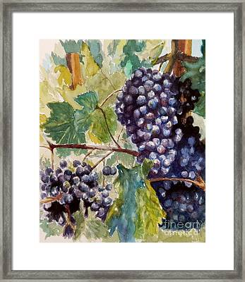 Wine Grapes Framed Print by William Reed