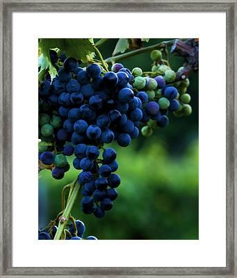 Wine On A Vine Framed Print by Ann Bridges