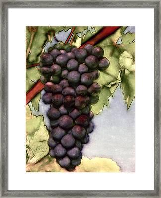 Wine On The Vine Framed Print by John K Woodruff