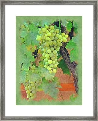 Wine On The Vine Framed Print
