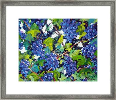 Wine On The Vine Framed Print by Richard T Pranke