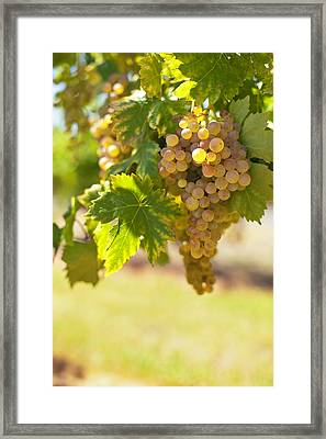 Wine   Framed Print by Ulrich Schade