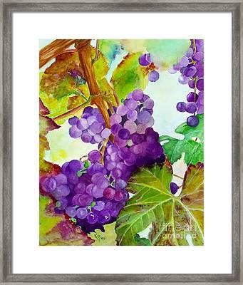 Wine Vine Framed Print by Karen Fleschler