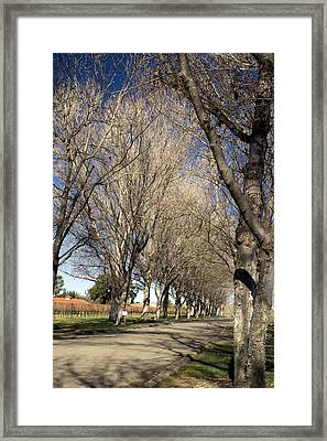 Winery Road Framed Print by Gary Brandes