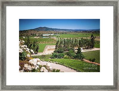 Vineyard View With Roses, Winery In Casablanca, Chile Framed Print