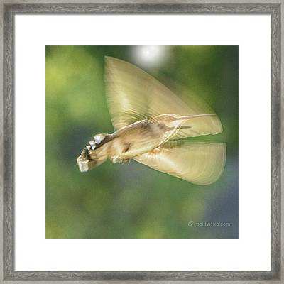 Wing Shadow Framed Print