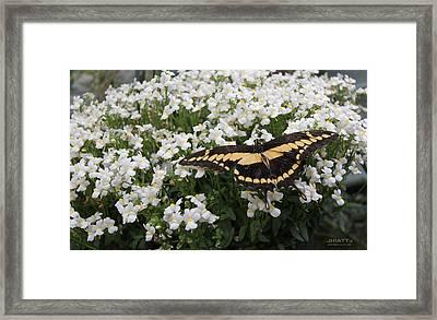 Wing Span Framed Print