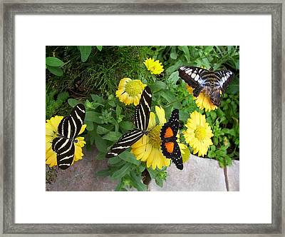 Framed Print featuring the photograph Winged Beauties by Sandy Collier
