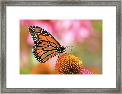 Framed Print featuring the photograph Winged Beauty by Doris Potter