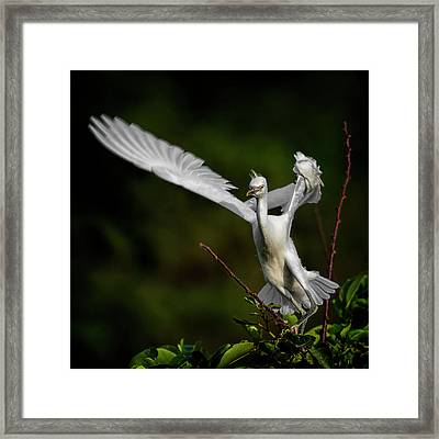 Winged Framed Print