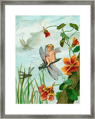 Winged Fairy Riding A Dragonfly Near Nasturtium Flowers Framed Print by Unknown