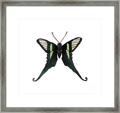 Winged Jewels 3, Watercolor Tropical Butterfly With Curled Wing Tips Framed Print