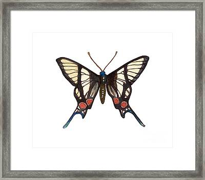 Winged Jewels 4, Watercolor Tropical Butterflie Black White Red Spots Framed Print