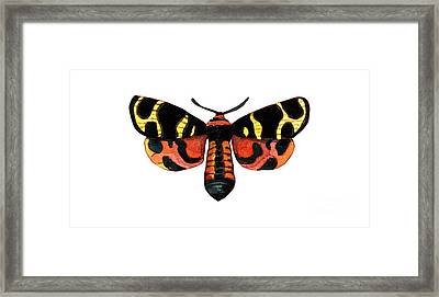 Winged Jewels 5, Watercolor Moth Black Yellow Orange And Red Tropical Framed Print