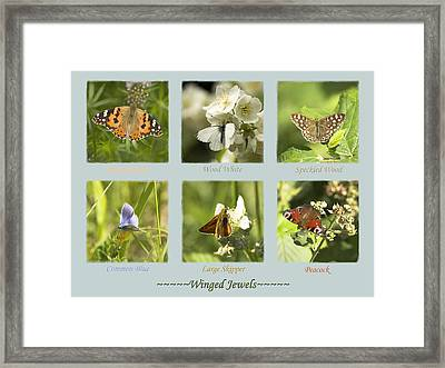 Winged Jewels Framed Print