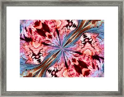 Winged Mite Framed Print by Karen M Scovill