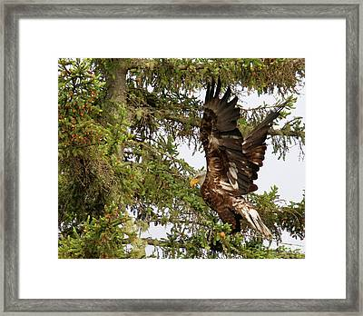 Framed Print featuring the photograph Winging-it Up The Tree 1 by Debbie Stahre
