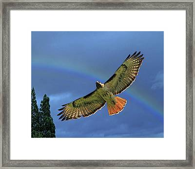 Wings 2 Framed Print by Donna Kennedy