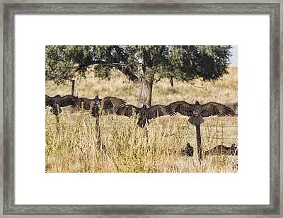 Framed Print featuring the photograph Wings Across Nebraska by Bill Kesler